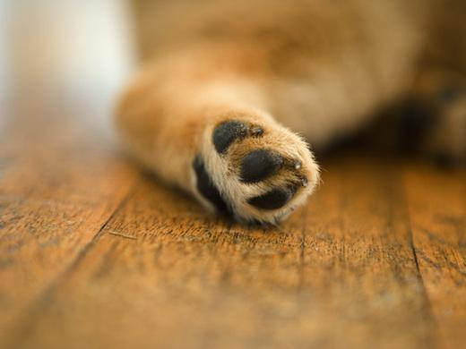 愛犬が喜ぶ姿を想像しながら      一緒に家づくりを楽しみましょう。      愛犬が「快適に」「楽しく」「安全に」家族と暮らすために      間取りの工夫、快適な設備のご提案で      住まいの夢を実現いたします。