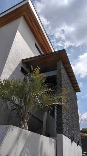 こちらはココスヤシです      存在感は抜群です!        家の外観は      外構工事で変わり      植物で変わり      シンボルツリーで変わります