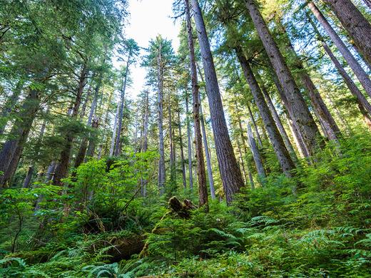 日本の林業が変わると      住宅業界も変わると思います      日本は国土の3分の2      およそ2500万ヘクタールという      広大な面積を森林に囲まれた      世界有数の森林国          ところが林業に従事する      人の割合はここ数十年で      急激に減っています